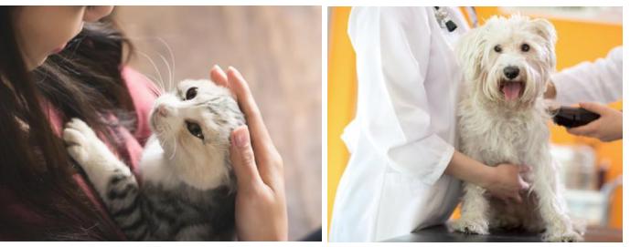 ペット看護の資格-イメージ